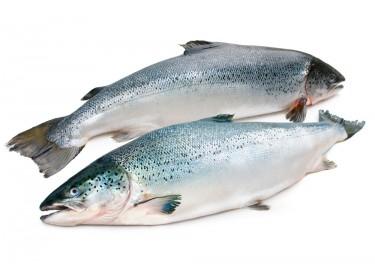 Salmone Norvegia Bio