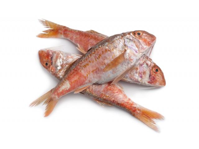 Costo e prezzo triglia di scoglio valori nutrizionali e for Pesce rosso costo