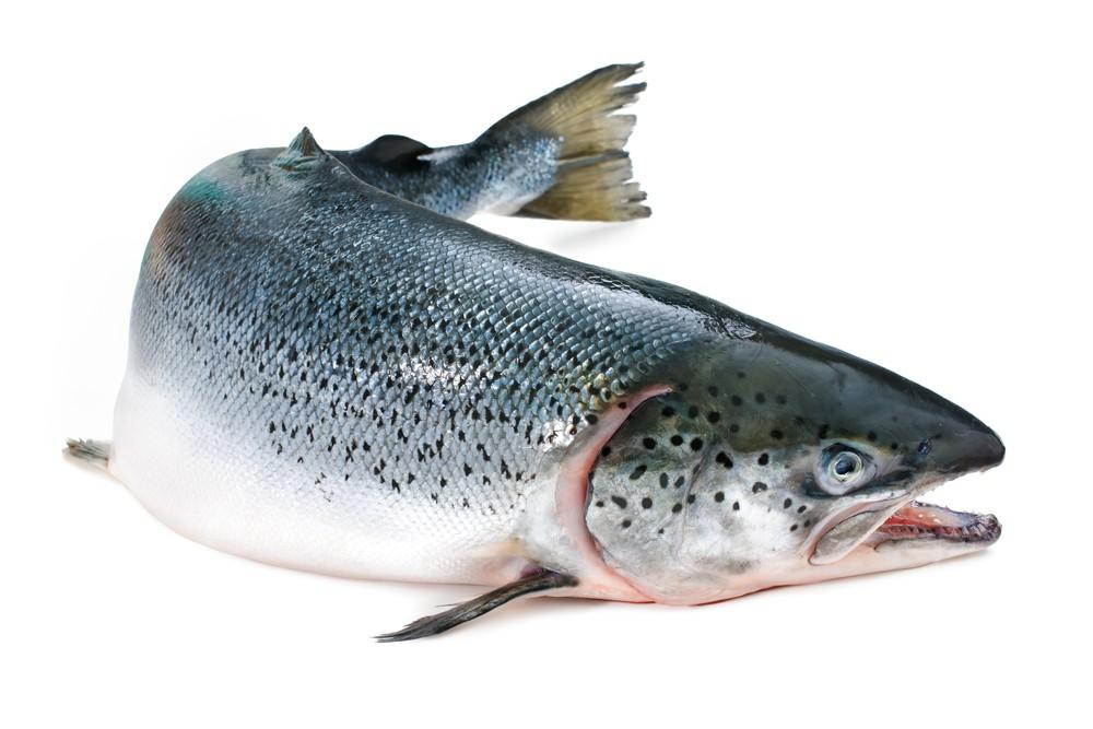 Salmone Norvegia