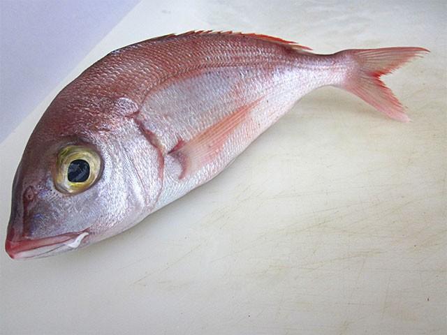 Ricetta pesce fragolino